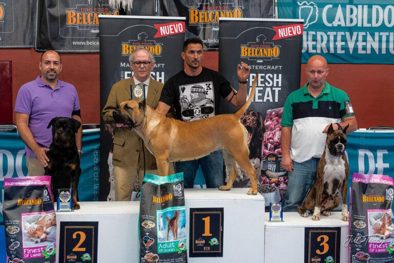 Dog Shows – Fuerteventura Style – Part 1!