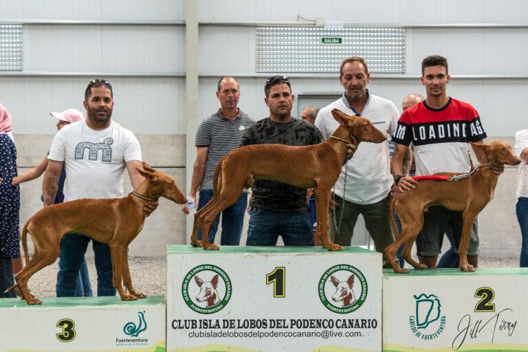 Dog Shows – Fuerteventura Style – Part 2!